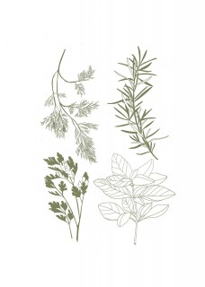 Plakat Herbary