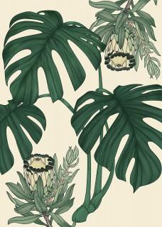 Monstera Protea