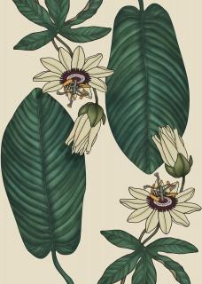Plakat Passiflora