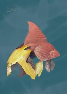 Plakat FolioFish