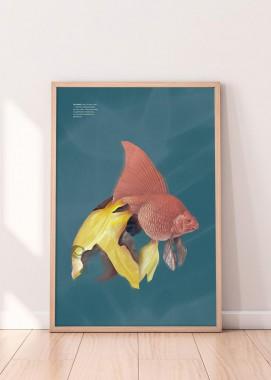 FolioFish