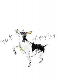 Terier
