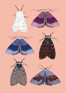Plakat Moths