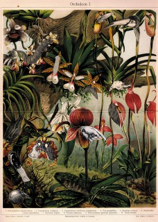 Plakat Orchidee