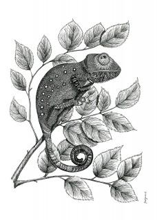 Kameleon II