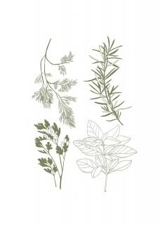 Herbary
