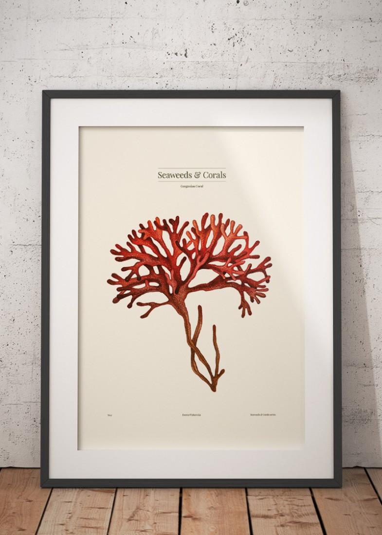 Gorgonian