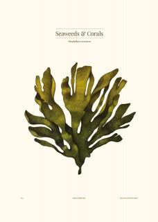 Plakat Nitophyllum